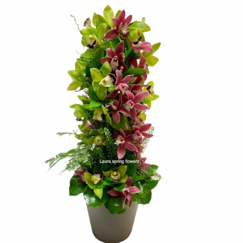 composition with Cymbidium orchids